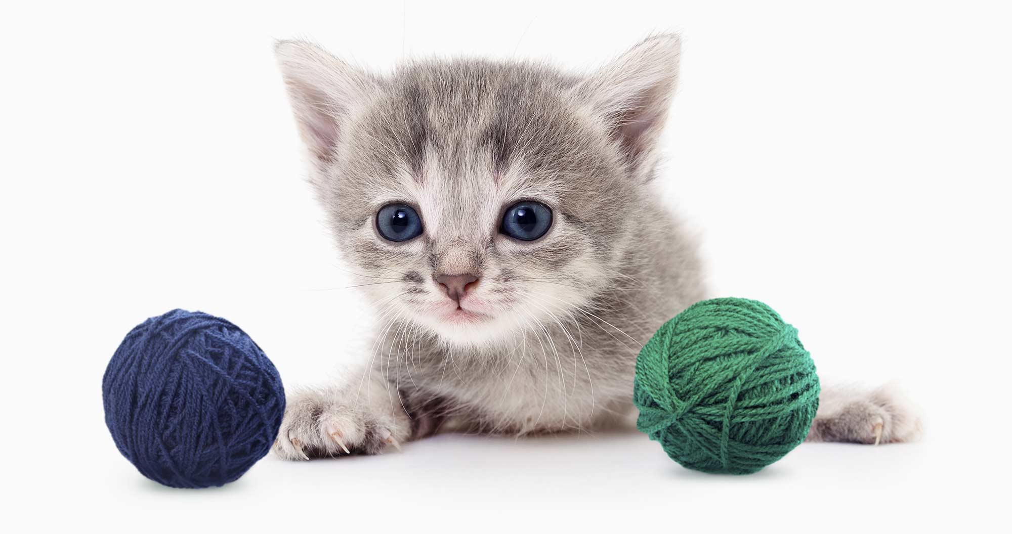Kitten with two balls of yarn