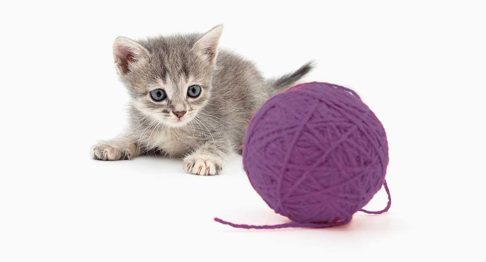 Cat with yarn ball
